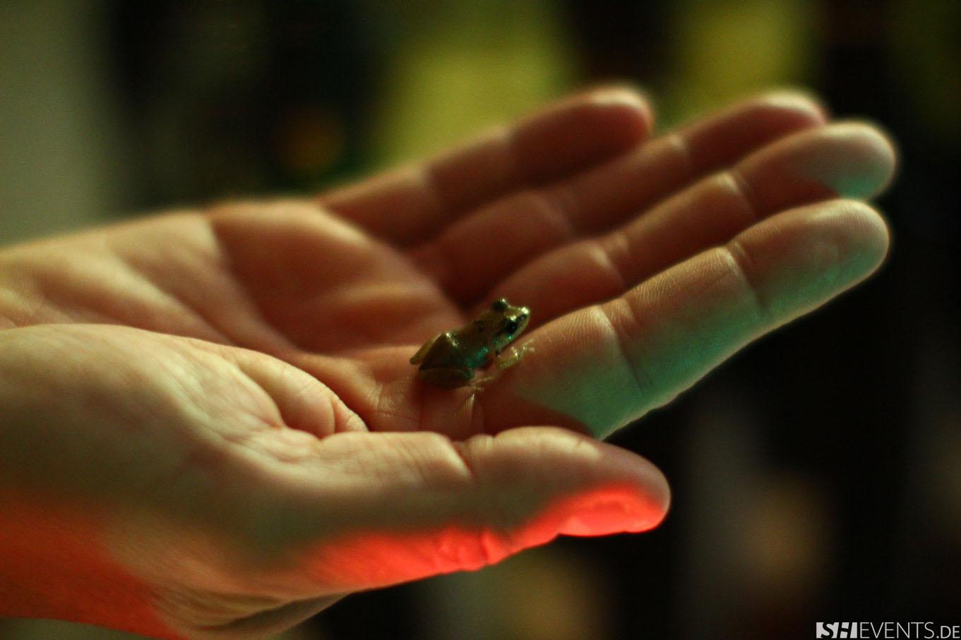 Kleiner Frosch auf einer Hand
