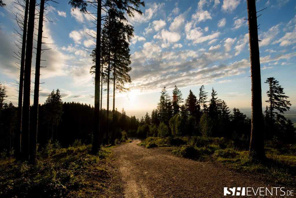 Waldweg zum Gipfel